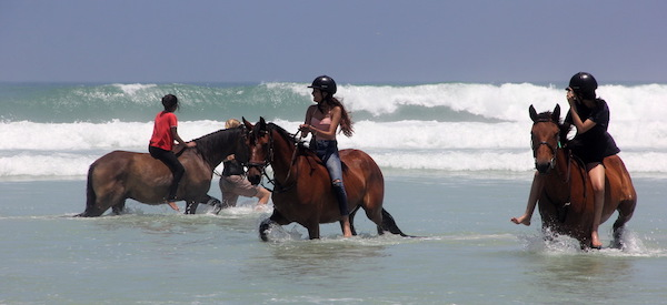 Group of horses and riders in the water at Pearly Beach South Africa