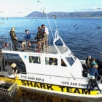 Shark cage diving at Gansbaai