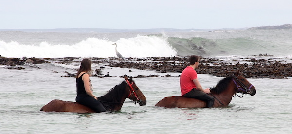 Riding horses in the sea at Pearly Beach
