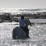 Horse wading through the water at Pearly Beach