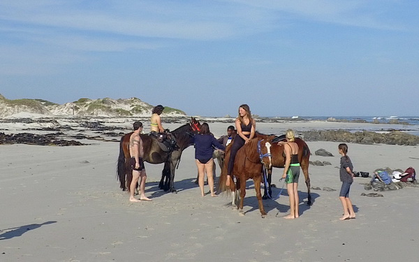 Group of horses on Pearly Beach
