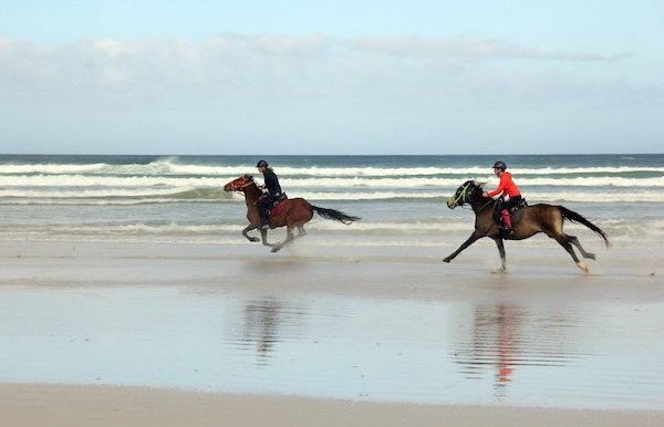 Galloping horses on Pearly Beach South Africa
